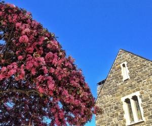 back-pink-tree